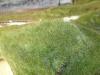 Flokování statickou trávou (zde hustý porost vytvořený vlákny 6 mm)